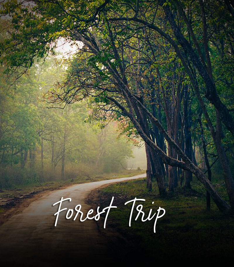Best forest trip